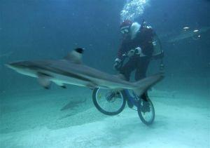 velo-requin