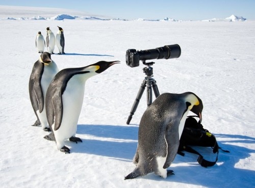 penguins-camera_2192455k