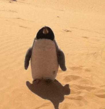 pingouin-desert-fail-noyan