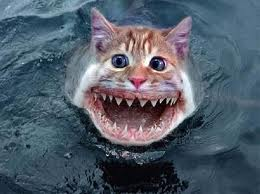 poisson chat 1