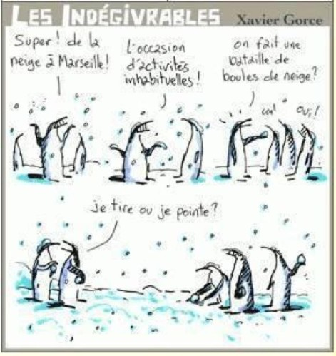 Jean-Marie-pingouins