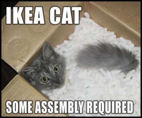 ikea-cat